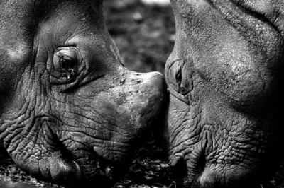 file2281336842641-rhinos-touch