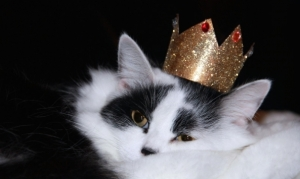 cat_crown